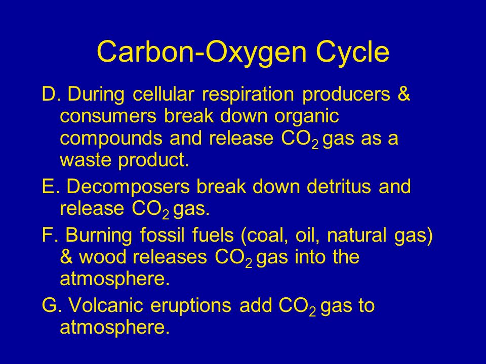 Carbon-Oxygen Cycle D. During cellular respiration producers & consumers break down organic compounds and release CO2 gas as a waste product.
