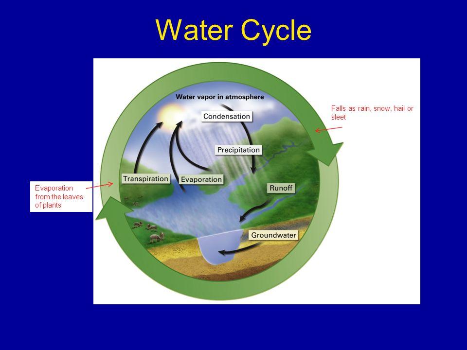 Water Cycle Falls as rain, snow, hail or sleet