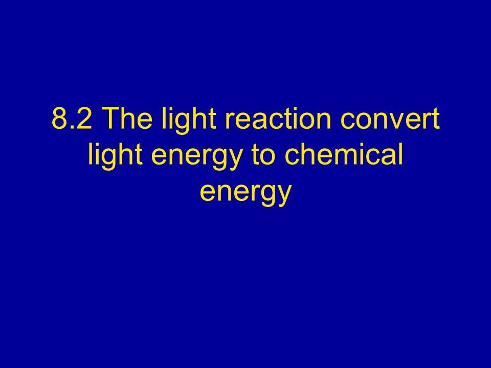 8.2 The light reaction convert light energy to chemical energy