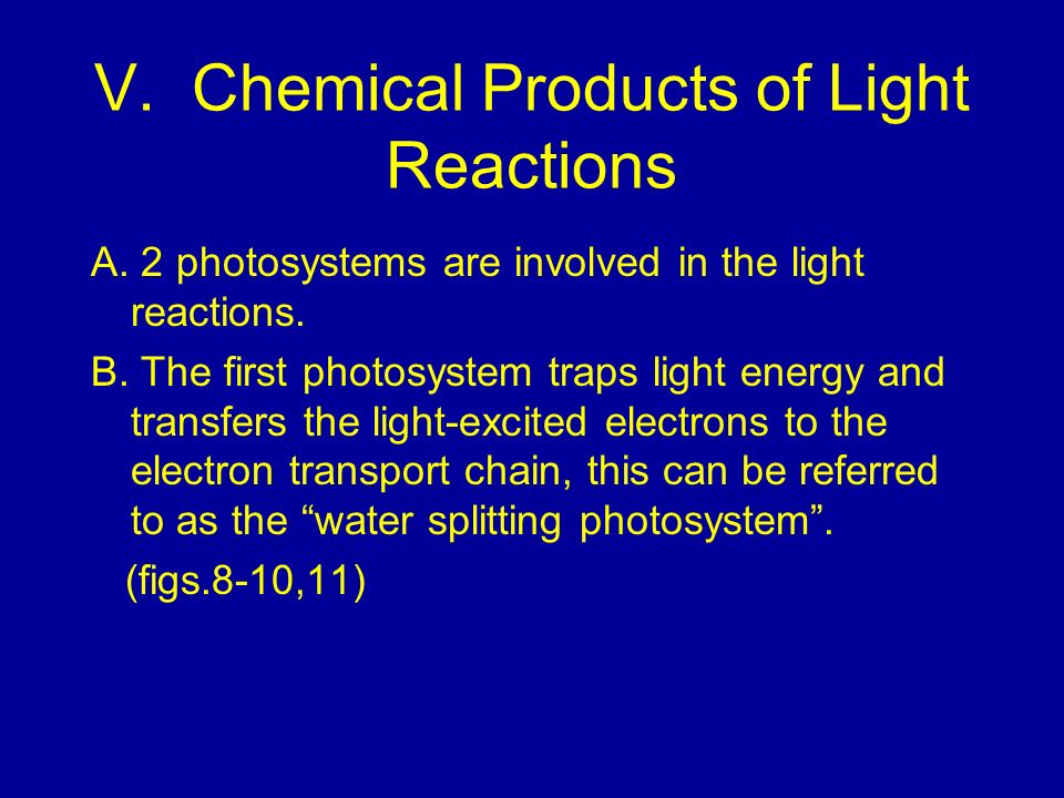 V. Chemical Products of Light Reactions