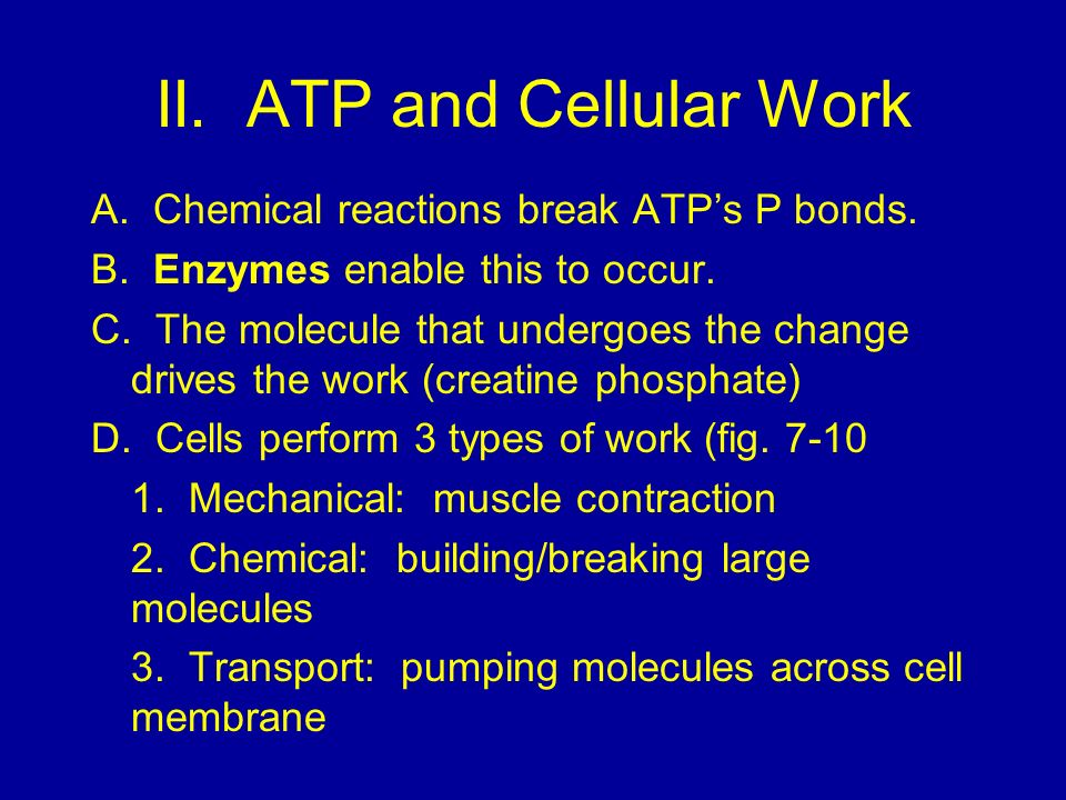 II. ATP and Cellular Work