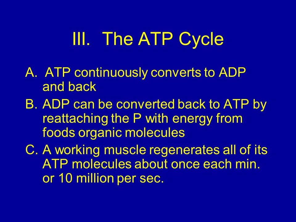 III. The ATP Cycle A. ATP continuously converts to ADP and back