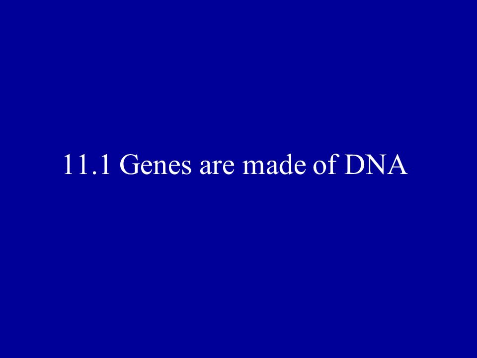 11.1 Genes are made of DNA