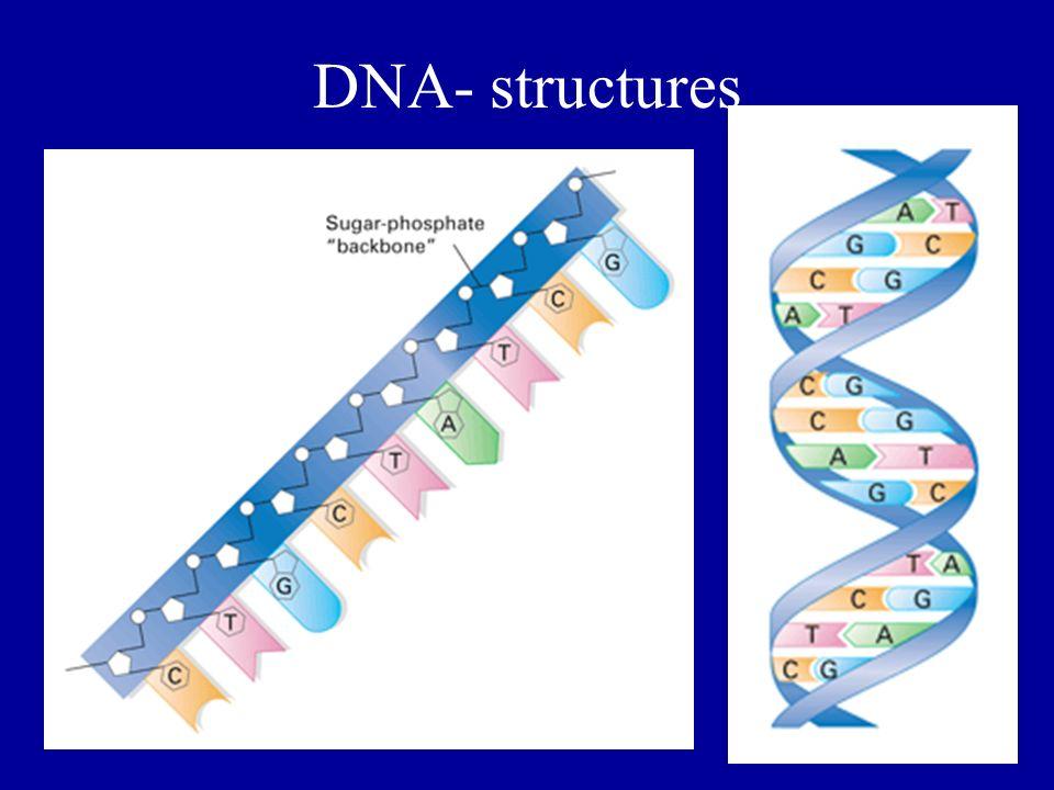 DNA- structures