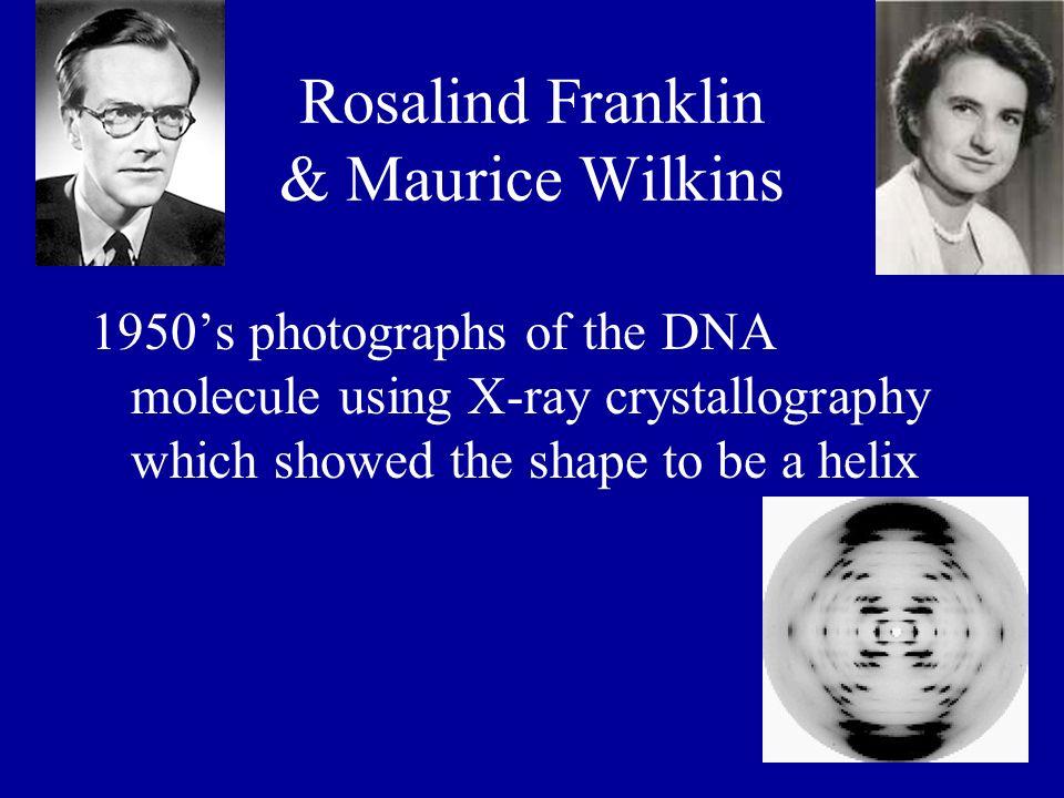 Rosalind Franklin & Maurice Wilkins