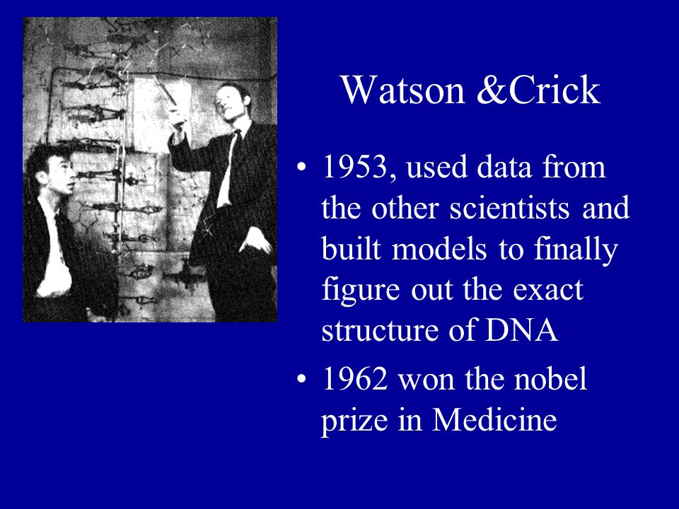 Watson &Crick 1953, used data from the other scientists and built models to finally figure out the exact structure of DNA.