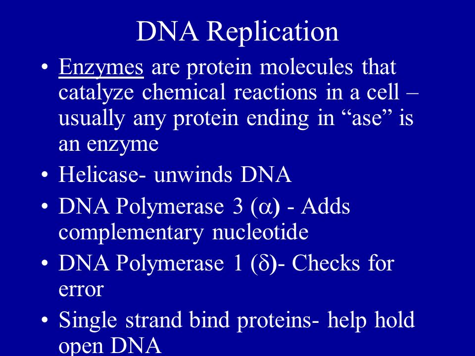 DNA Replication Enzymes are protein molecules that catalyze chemical reactions in a cell – usually any protein ending in ase is an enzyme.
