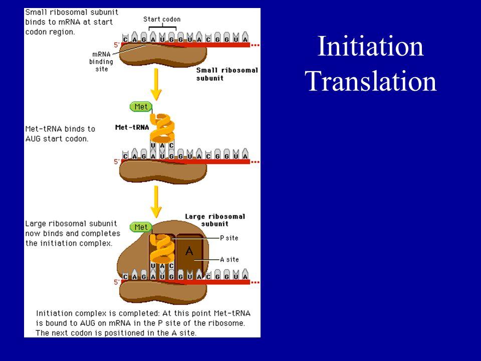 Initiation Translation