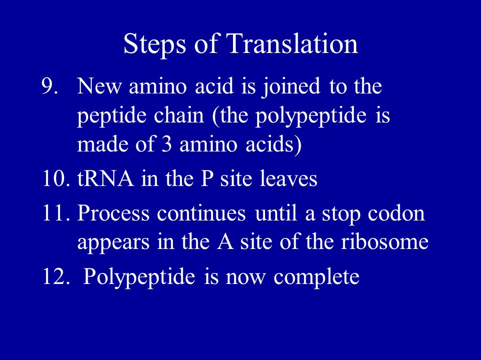 Steps of Translation 9. New amino acid is joined to the peptide chain (the polypeptide is made of 3 amino acids)
