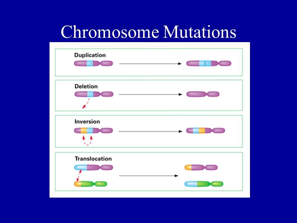 Chromosome Mutations