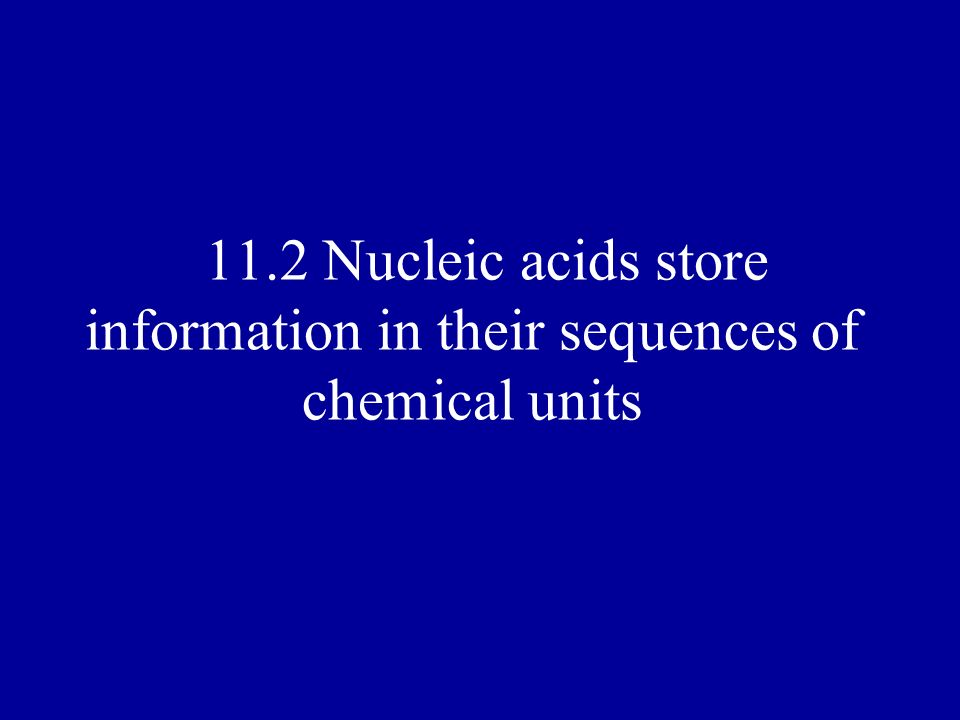 11.2 Nucleic acids store information in their sequences of chemical units