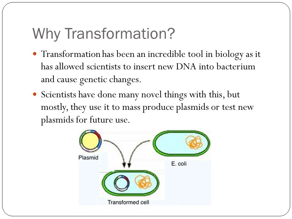 transformation biology Bacterial transformation can insert or delete genomic islands (gis), depending   supplementary data are available at molecular biology and.