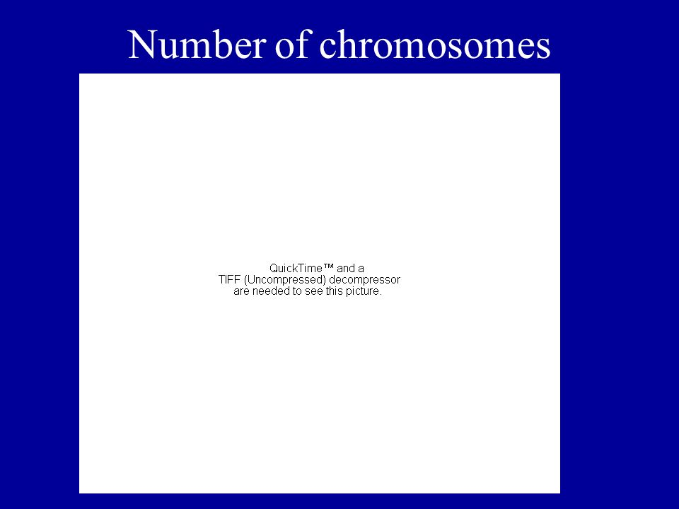Number of chromosomes