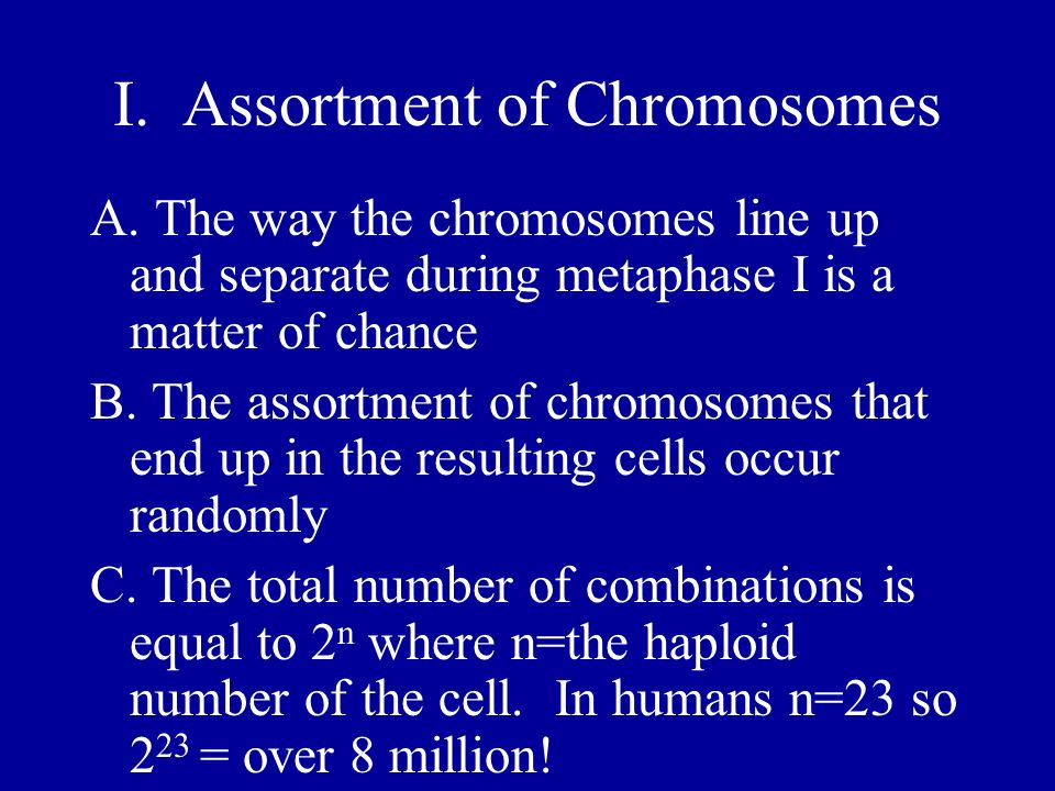 I. Assortment of Chromosomes