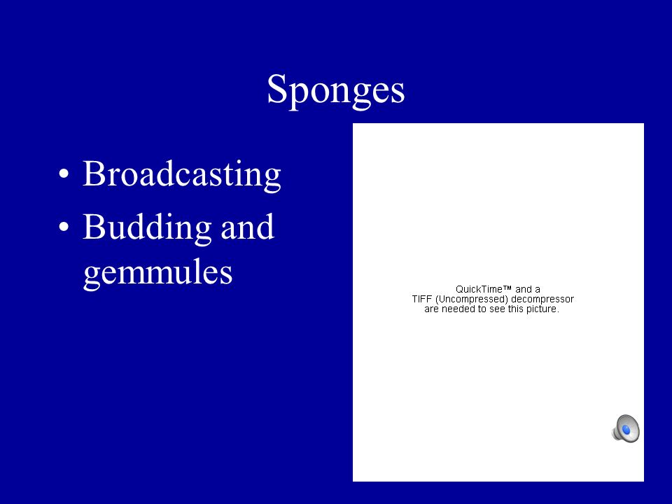 Sponges Broadcasting Budding and gemmules