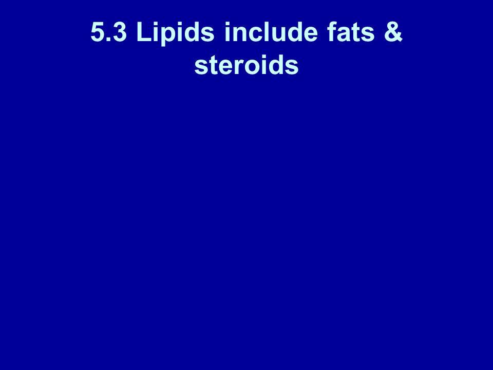 5.3 Lipids include fats & steroids