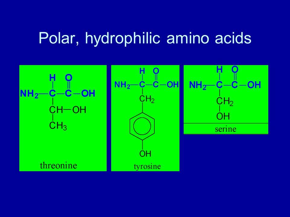 Polar, hydrophilic amino acids