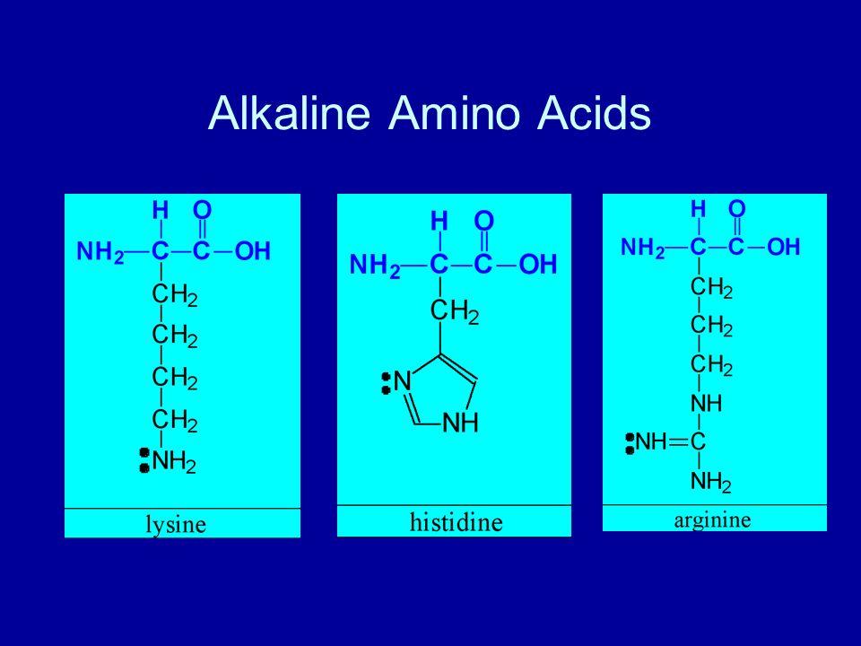 Alkaline Amino Acids