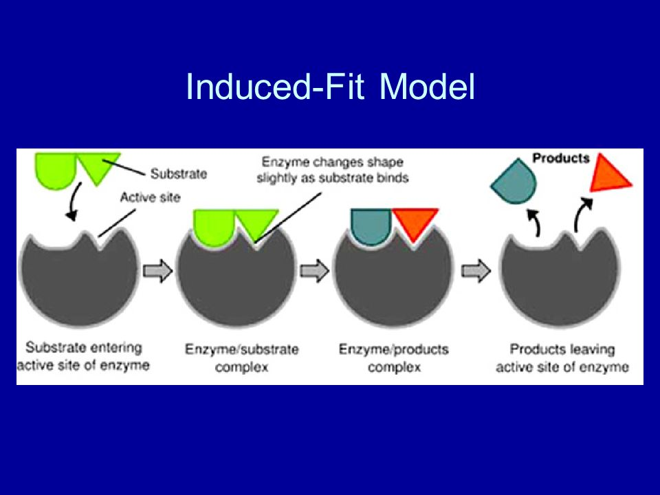 Induced-Fit Model