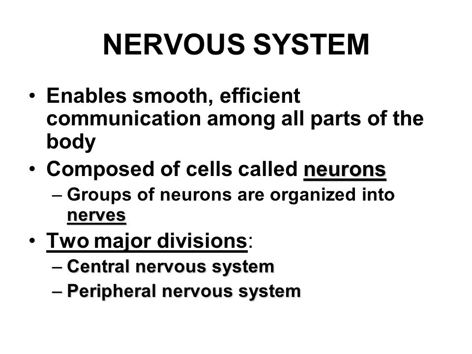 nervous system the agility and balance needed for fencing