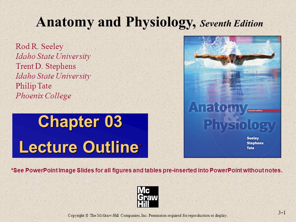 Vistoso Anatomy And Physiology Seeley 8th Edition Colección de ...