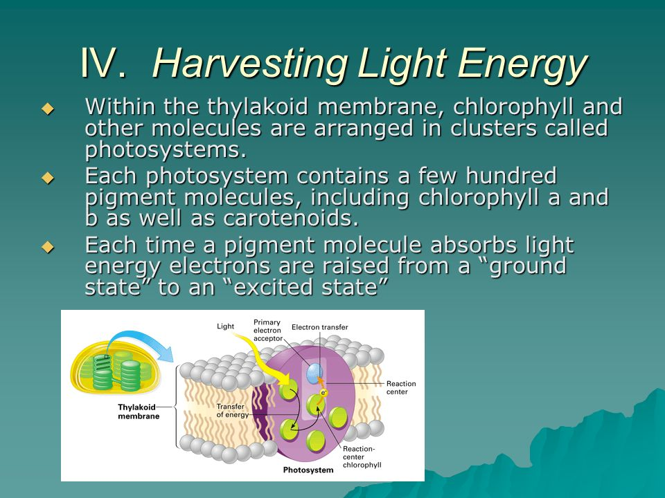 IV. Harvesting Light Energy