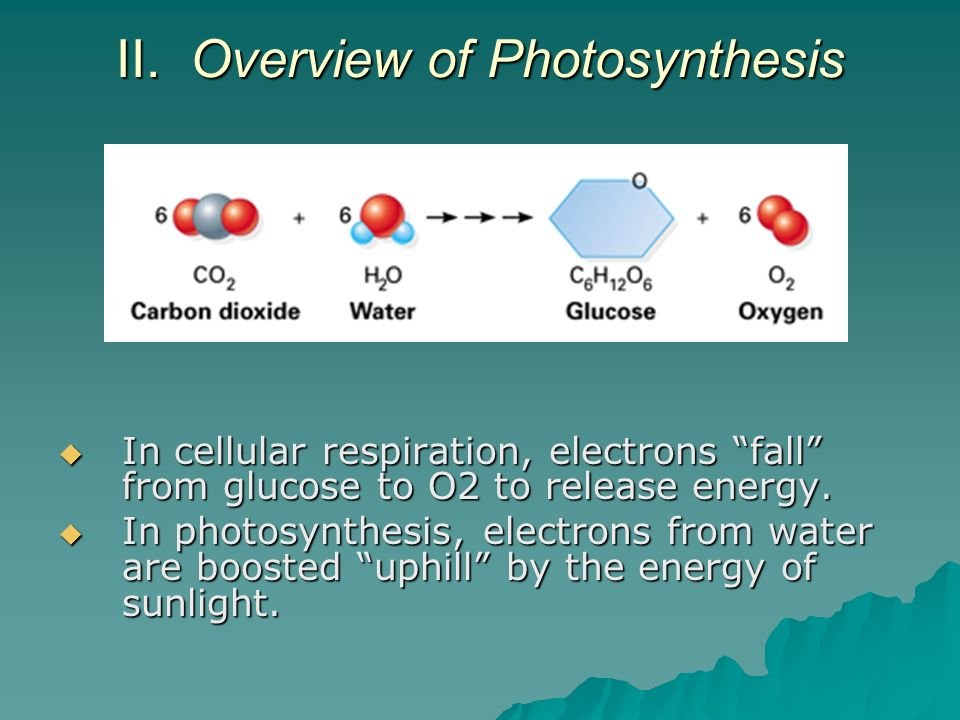 II. Overview of Photosynthesis