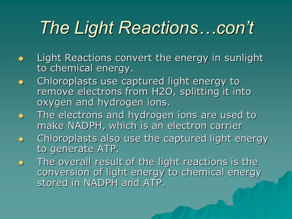 The Light Reactions…con't