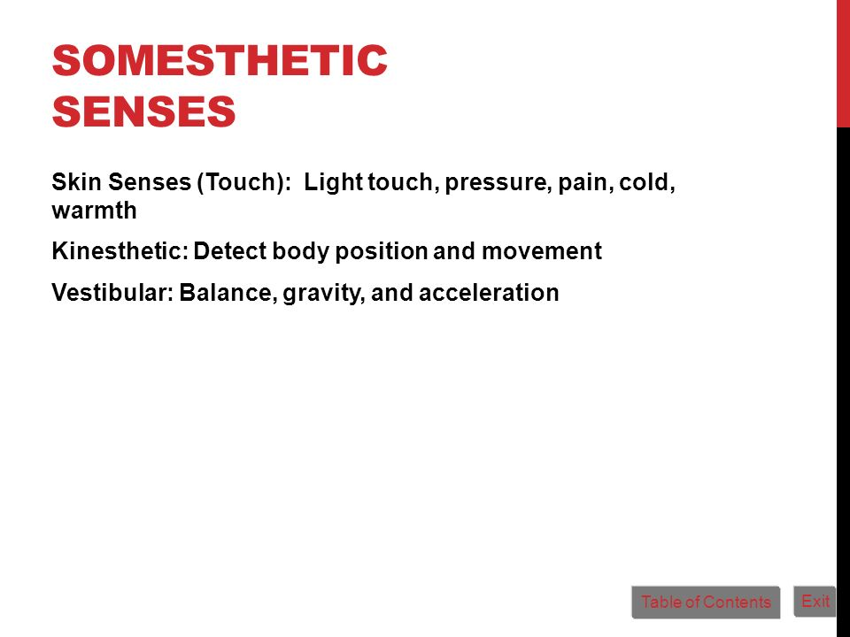 Somesthetic Senses