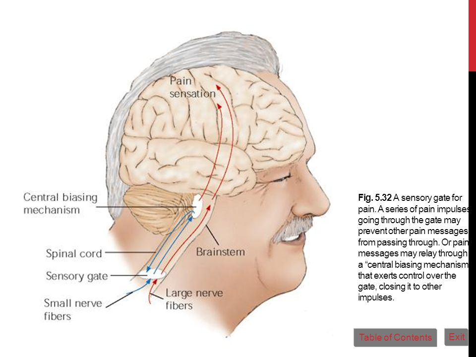 Fig. 5. 32 A sensory gate for pain