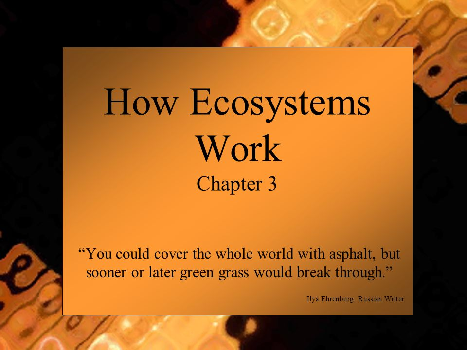 How Ecosystems Work Chapter 3