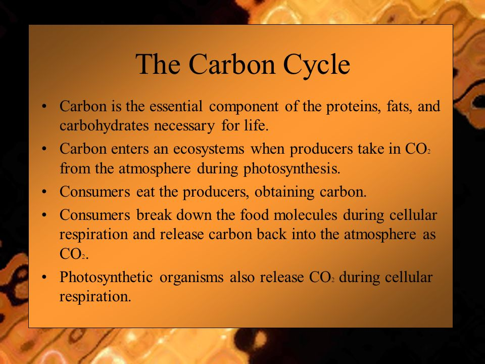 The Carbon Cycle Carbon is the essential component of the proteins, fats, and carbohydrates necessary for life.