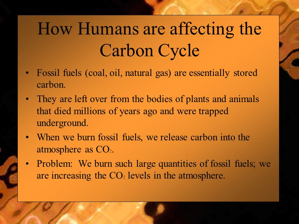 How Humans are affecting the Carbon Cycle