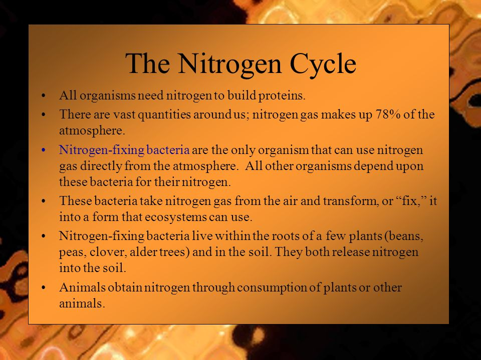 The Nitrogen Cycle All organisms need nitrogen to build proteins.