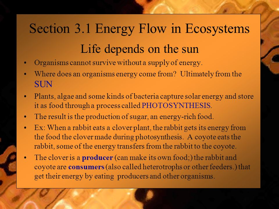 Section 3.1 Energy Flow in Ecosystems