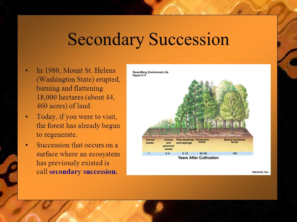Secondary Succession In 1980, Mount St. Helens (Washington State) erupted, burning and flattening 18,000 hectares (about 44, 460 acres) of land.