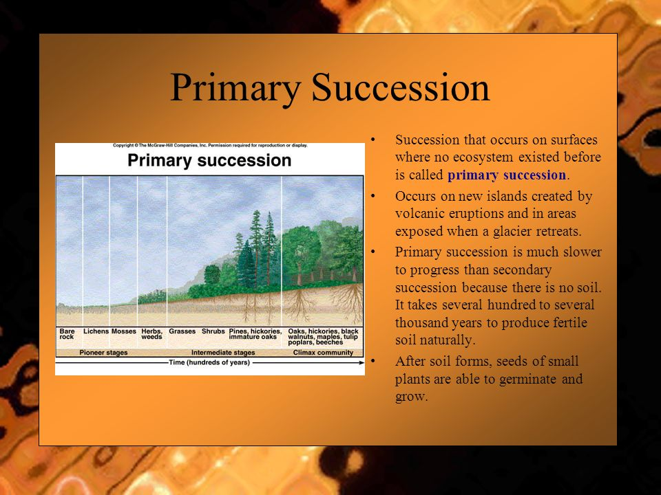 Primary Succession Succession that occurs on surfaces where no ecosystem existed before is called primary succession.