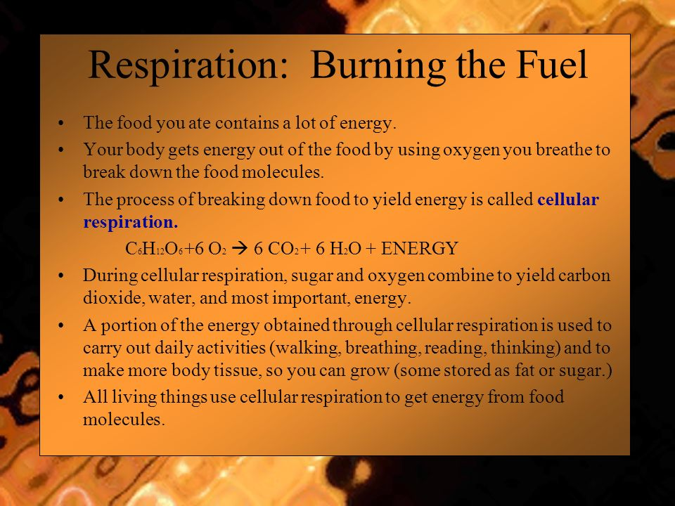 Respiration: Burning the Fuel