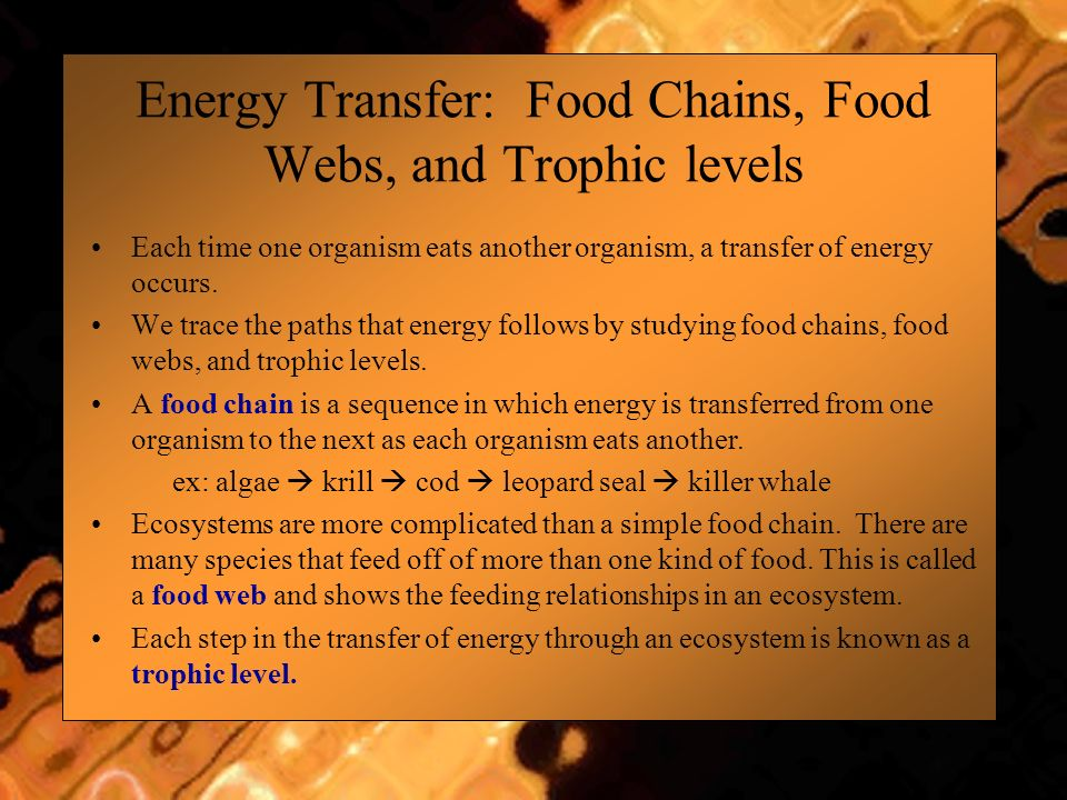Energy Transfer: Food Chains, Food Webs, and Trophic levels