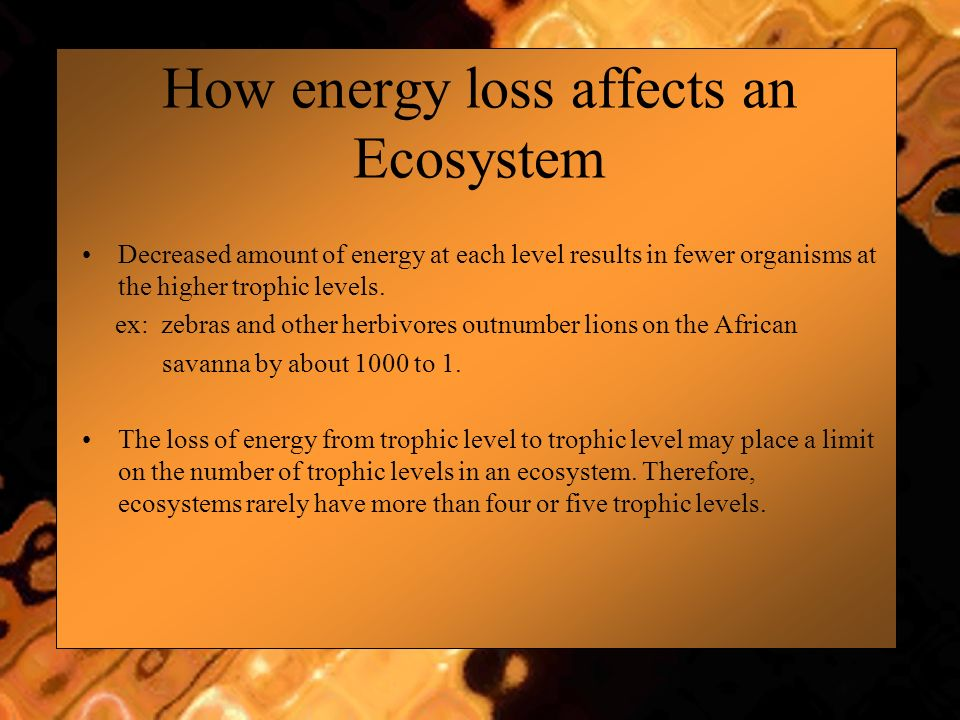 How energy loss affects an Ecosystem