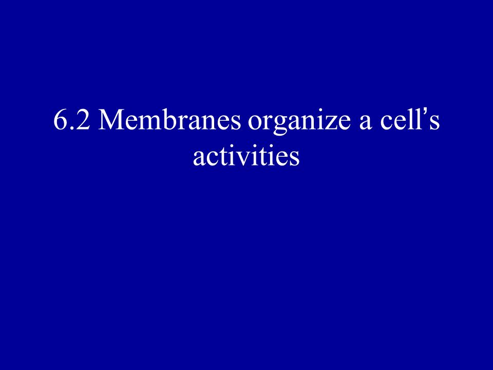 6.2 Membranes organize a cell's activities