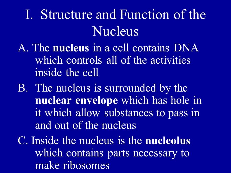 I. Structure and Function of the Nucleus