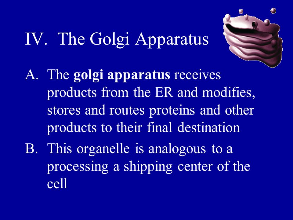 IV. The Golgi Apparatus