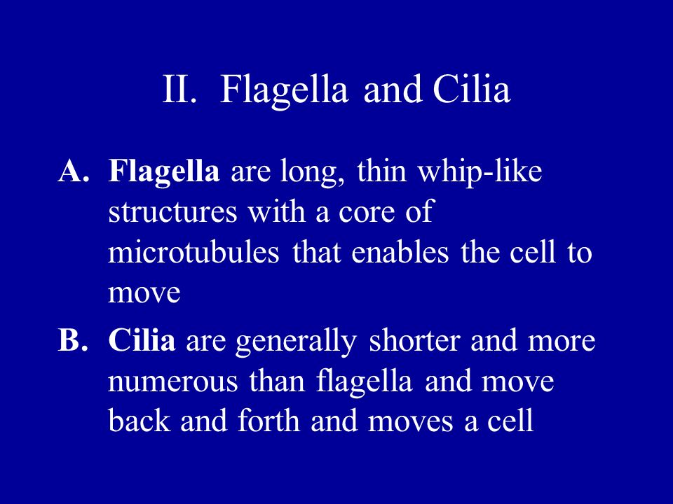 II. Flagella and Cilia Flagella are long, thin whip-like structures with a core of microtubules that enables the cell to move.
