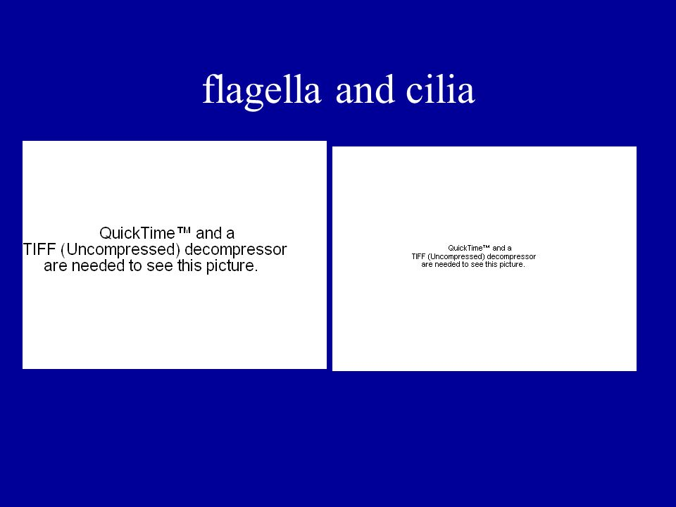 flagella and cilia