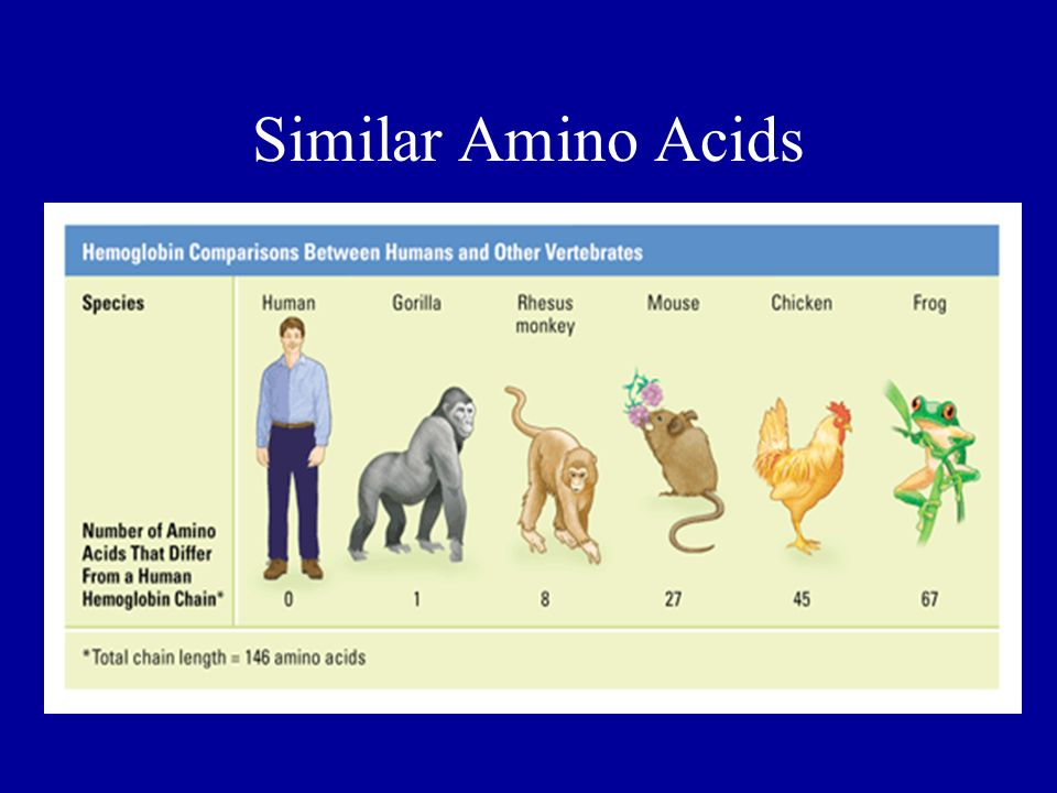 Similar Amino Acids