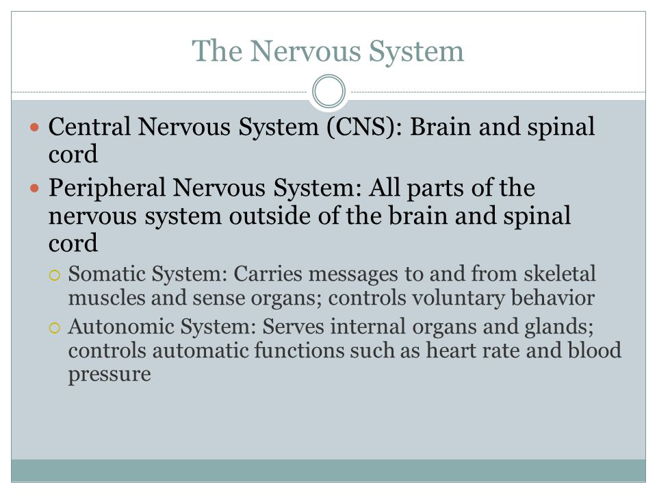 The Nervous System Central Nervous System (CNS): Brain and spinal cord
