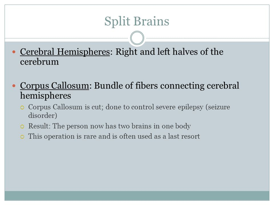 Split Brains Cerebral Hemispheres: Right and left halves of the cerebrum. Corpus Callosum: Bundle of fibers connecting cerebral hemispheres.