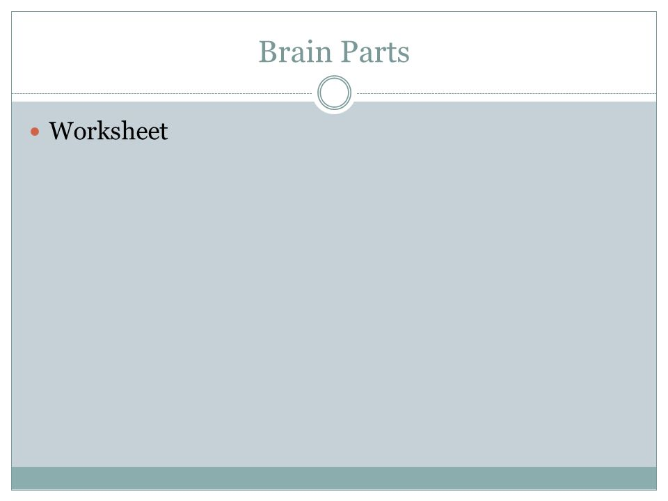 Brain Parts Worksheet