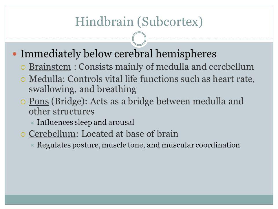 Hindbrain (Subcortex)